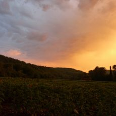 Magnifique couché de soleil, c'est toute la beauté de la nature que vous retrouverez au Douzou en Dordogne Périgord Noir