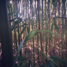 Le camping le Douzou en Dordogne Périgord près de Sarlat est situé en pleine nature avec notamment une forêt de Bambous
