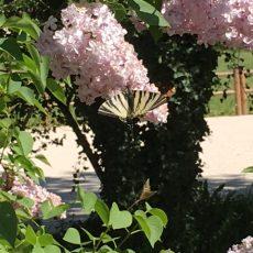 Vous retrouverez au camping 3 étoiles le Douzou en Dordogne Périgord toute la beauté de la faune et de la flore.
