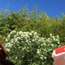 Le camping le Douzou en Dordogne Périgord Noir est magnifiquement fleuri au printemps