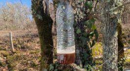 Piege frelon asiatique camping périgord 3 étoiles