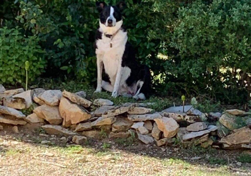 chien accépté camping dordogne 3 étoiles