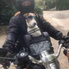 chien motard camping dordogne
