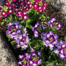 fleurs camping dordogne 3 étoiles