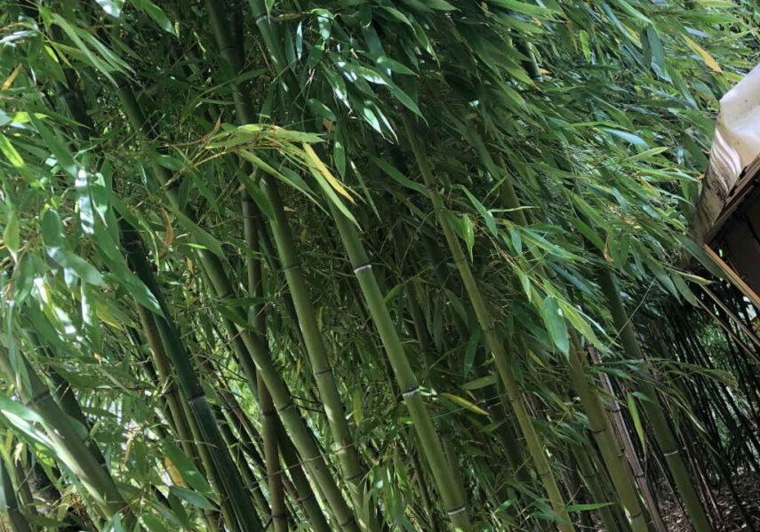 forêt bambous camping dordogne