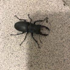 scarabé camping dordogne